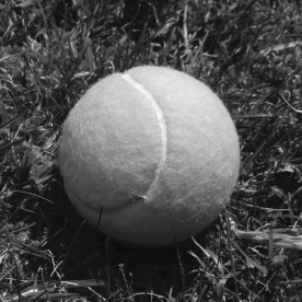 Tennis ball (Jane Monach)