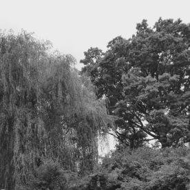 Trees (Edna Comer)