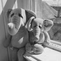 142 Elephants